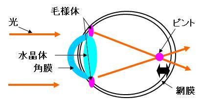 近視・軸性近視