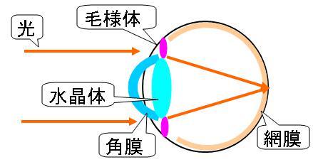視力を上げる方法・目の仕組み